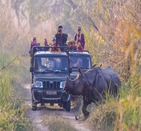 Safari Tour - Jungle Safari
